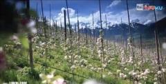 纯素皮革:意大利环保苹果素皮革